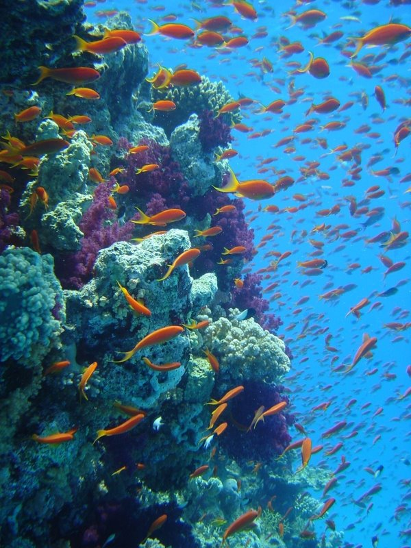 an introduction to the nature of coral reefs When surveying a coral reef introduction  health of its coral reefs is critical to its economy and thus,  history and nature of science.